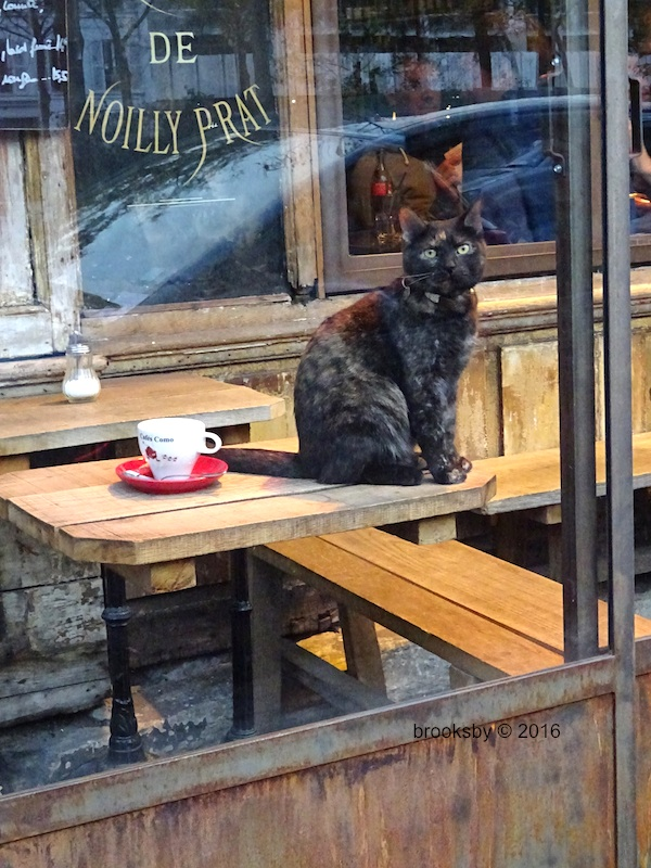 photo of Parisian cat